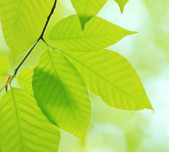 Лучший выбор на лето: освежающие зелёные ароматы для мужчин и женщин